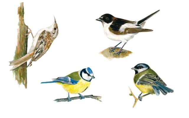 Quiz om fugle