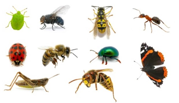 Quiz om insekter