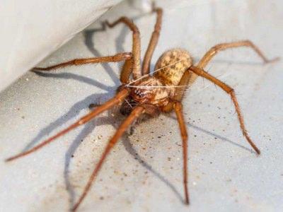 Spindere og edderkopper