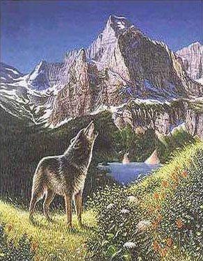 illusioner og synsbedrag - ulve